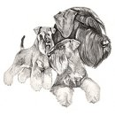Giant Schnauzer Health Fund Supported by the Northern Schnauzer Club